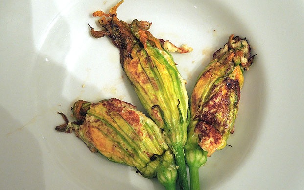 zucchiniblueten6